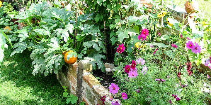 Erde:  Ein Bauerngarten im  Hochbeet