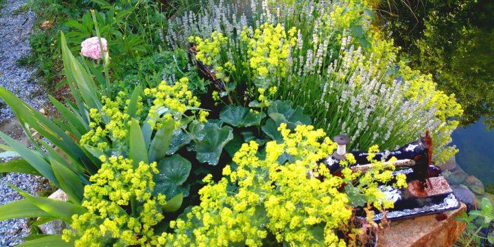 Kunst:  Deko-Elemente in einem Pflanzen-Arrangement