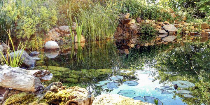 Wasser:  Ein idyllische Schwimmteich-Oase