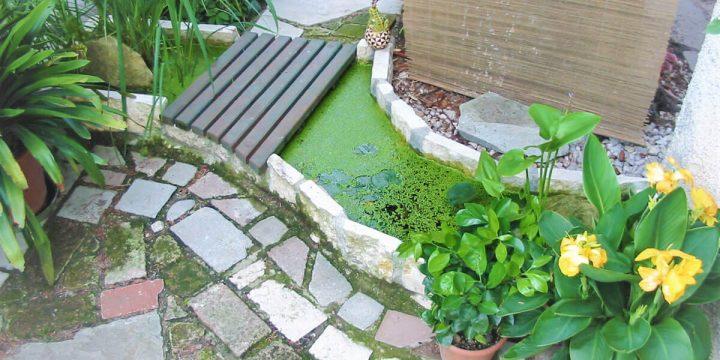 Wasser: Kein Platz ist zu klein für einen Miniteich!